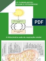Biologia PPT - Botânica - A Célula Vegetal