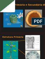 Biologia PPT - Botânica - Aula Caule