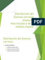 Distribución Del Sistema Nervioso