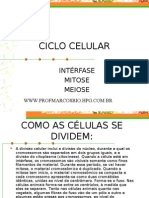 Biologia PPT - Ciclo Celular