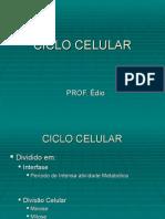 Biologia PPT - Ciclo Celular Mitose e Meiose