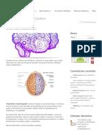 Los Hemisferios Del Cerebro