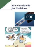 5. Nucleótidos