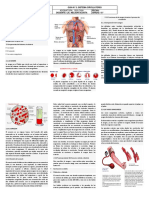 77b7d1sistema circulatorio