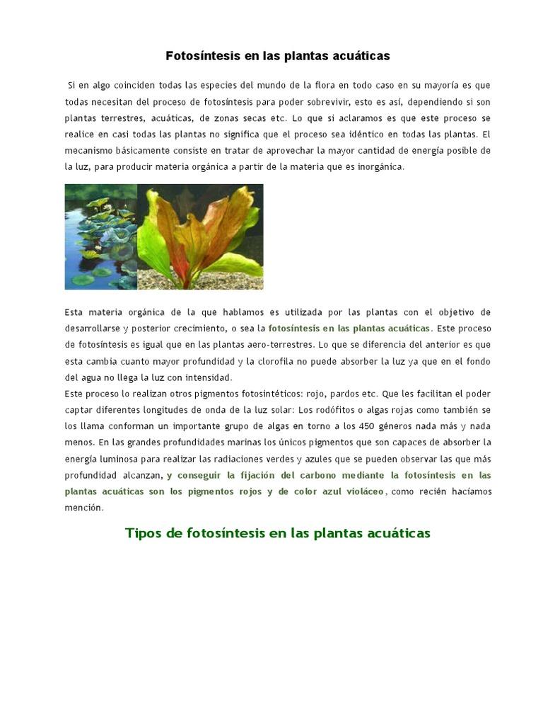 La Reproducción en Las Plantas | Fotosíntesis | Plantas
