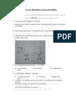 Examen de Anatomia y Fisiologia Animal II