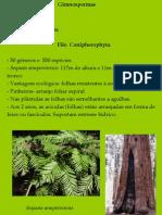 Biologia PPT - Botânica - Gimnospermas 02