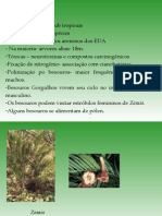 Biologia PPT - Botânica - Gimnospermas 03