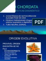 Biologia PPT - Filo Chordata