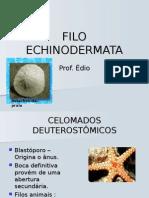 Biologia PPT - Filo Echinodermata