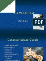 Biologia PPT - Filo Mollusca