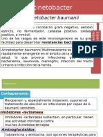 Acinetobacter -