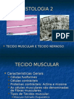 Biologia PPT - Histologia Animal2