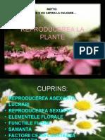 PPT LA PLANTE