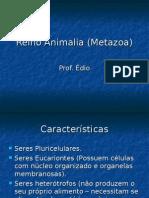 Biologia PPT - Reino Animalia (Metazoa)
