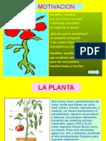 91696066-Ppt-Las-Plantas.ppt