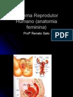 Biologia PPT - Sistema Reprodutor Humano (Anatomia Feminina)