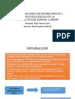 consideraciones neurofisiologicas y neuromecanicas del sindrome de dolor lumbar