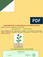Clasificacion de Plantas