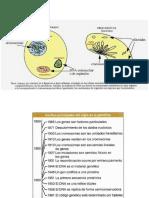 Unidad-I-Flujo-de-Información-genética-y-Bioquímica.pdf