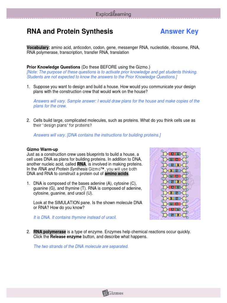 RNAProteinSynthesisSE KEY | Translation (Biology) | Rna