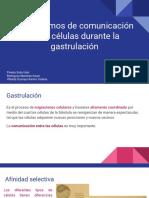 Mecanismos de Comunicación Entre Células Durante La Gastrulación