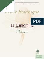 Dossier Botanique Camomille