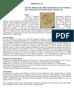 Práctica parasitologia