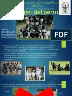 Origen Del Perro Comportamiento y Bienestar Animal