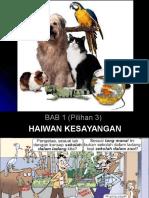slaid bab6 haiwan kesayangan