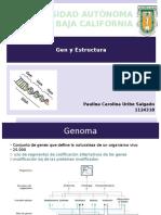 Gen y Estructura