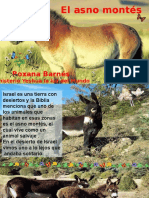 El Asno Montés-Roxana