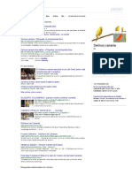 Canario - Buscar Con Google