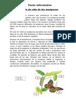 Texto Informativo de Las Mariposas
