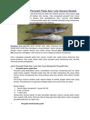 Penyakit Ikan Gurame Mata Belo Infoakuakultur Com
