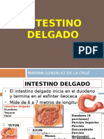 clasedeintestinodelgadoygrueso2013-130820102723-phpapp02RECORTE