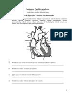 Cardio -E