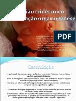 GASTRULAO E ORGANOGENESE 2