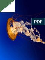 Jellyfish (1)
