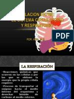 relacionentreelsistemacirculatorioyrespiratorio-130617144925-phpapp02 (1).ppt