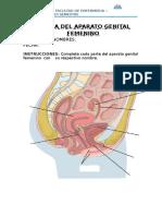 ANATOMIA DEL APARATO GENITAL FEMENINO.docx