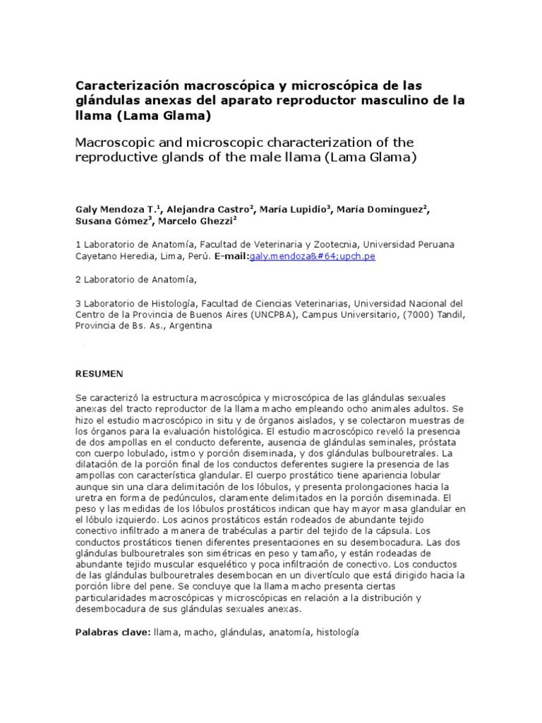 Caracterización Macroscópica y Microscópica de Las Glándulas Anexas ...