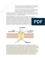 Las Proteínas Transportadoras Determinan La Permeabilidad Selectiva de La Membrana Celular