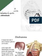 04-diaframma