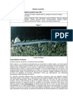Geotria Australis P03R4 RCE CORREGIDO