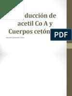 Producción de Acetil Co a y Cuerpos Cetónicos (1)Final