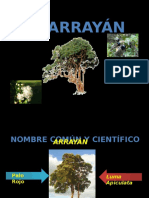 El Arrayán