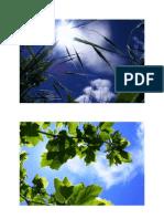 Impresii de Primavara - Spring Impressions