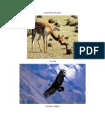 Animales Del Perú y su clasificación según la regiones