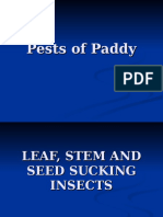 Pests of Paddy